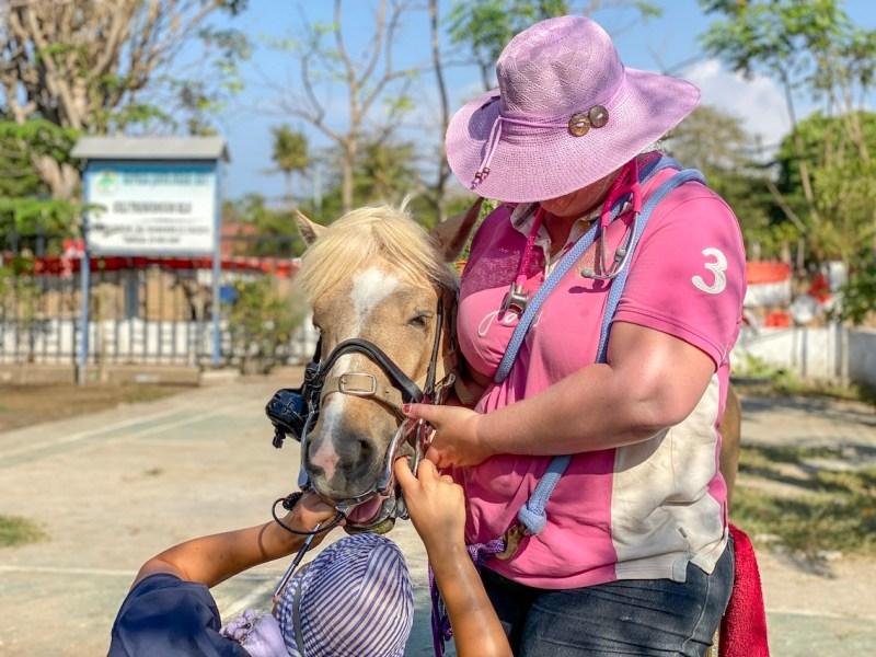 Horse Clinic on Gili T Dental Work