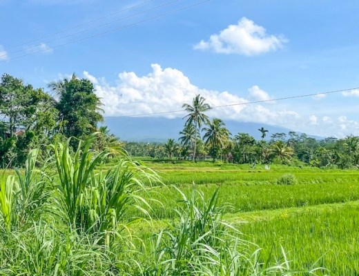 rice terraces in Lombok