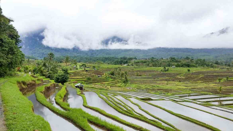 Jatiluwih Rice Terraces   Best Bali Sunset