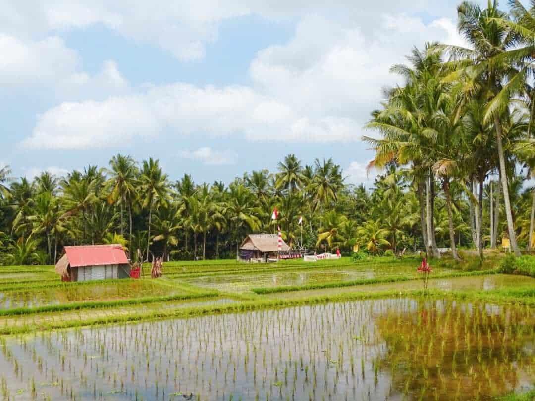 Ubud Rice Paddies   Best Bali Sunset