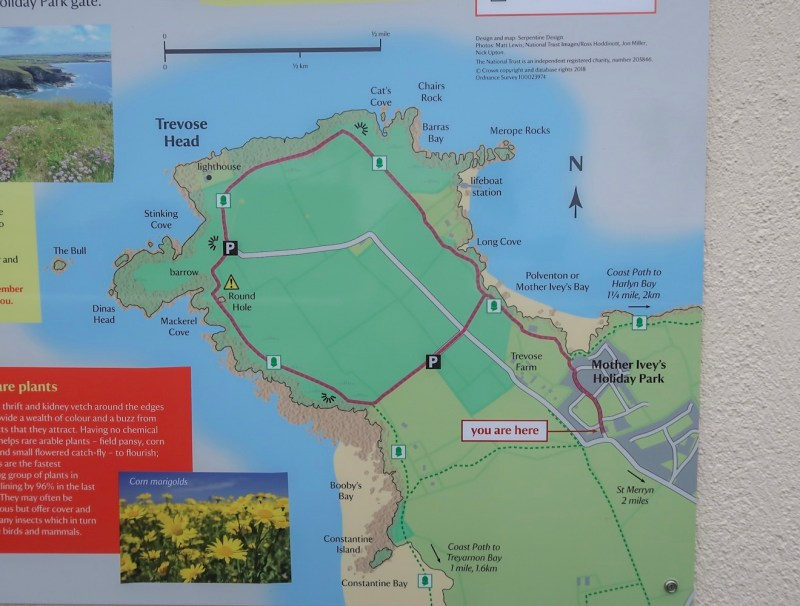 Things to do in Padstow Cornwall, Mother Iveys Bay Walk
