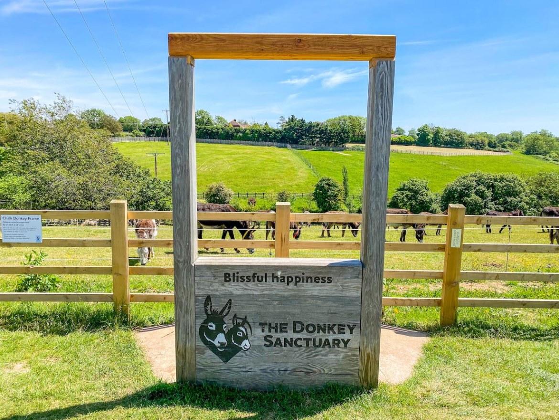 Sidmouth Donkey Sanctuary near Royal Oak Farm Devon