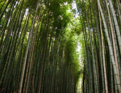 blog-bamboo-forest-2