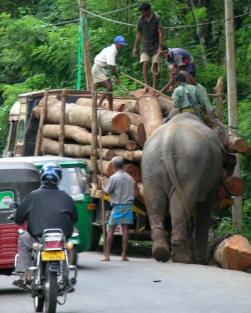 """""""What is it?"""", she asked. """"Come. Come and look!. It's an elephant loading a truck."""""""
