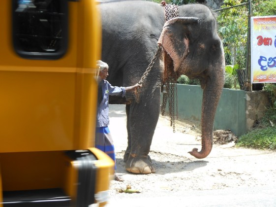 Elephant and bus