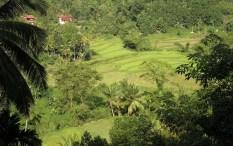 Pindeniya Farmhouses
