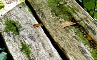 7 The Plank Bench at the Edge of the Fairy Forest
