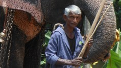 An Elephant Embrace
