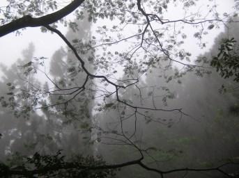 Knuckles Mist 3