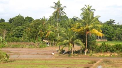 A city farm