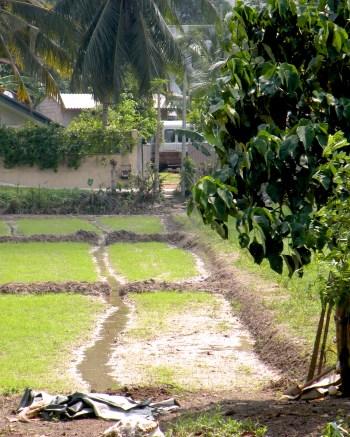 City irrigation Channels