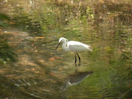 Egret in the shade