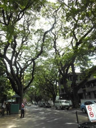 Shadows & Shade - Reopened Dhamapala Mawatha, Colombo