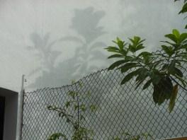 Shadows & Shade Tree Projections