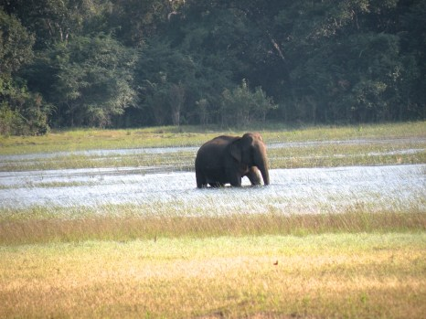 Emerging from the forest, around a bend and there, wading chest deep in a lake, was a lone bull elephant