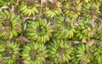 The rear end view of a truckload of carefully arranged bananas