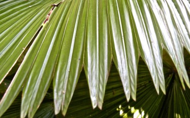 shots around a fan palm 1