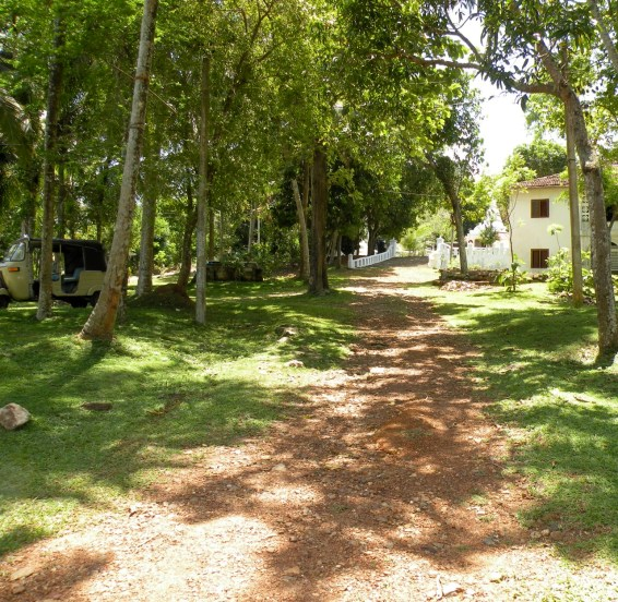 Dappled road - Thalpe way