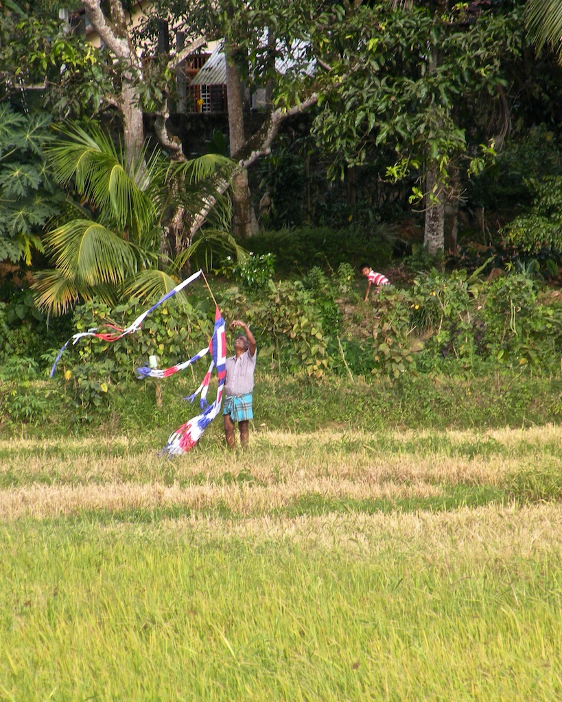 Playtime in the Paddy Fields 8