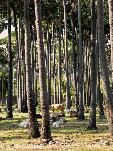 Palmyra Forest 3