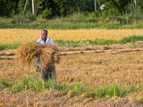 Harvest Time and the Maalu Man 21