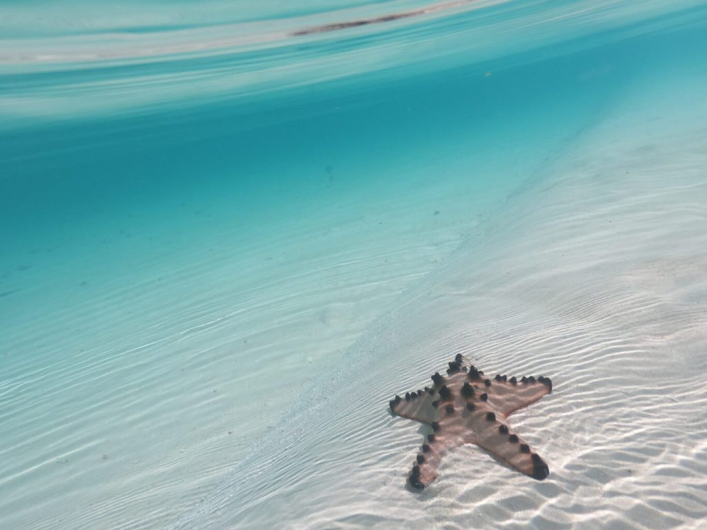 Clear waters and starfish are common in Balabac Palawan