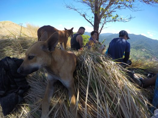 Enjoying the shade near the summit of Mt Malac along with these 2 dogs of our guide Kuya Bogol.