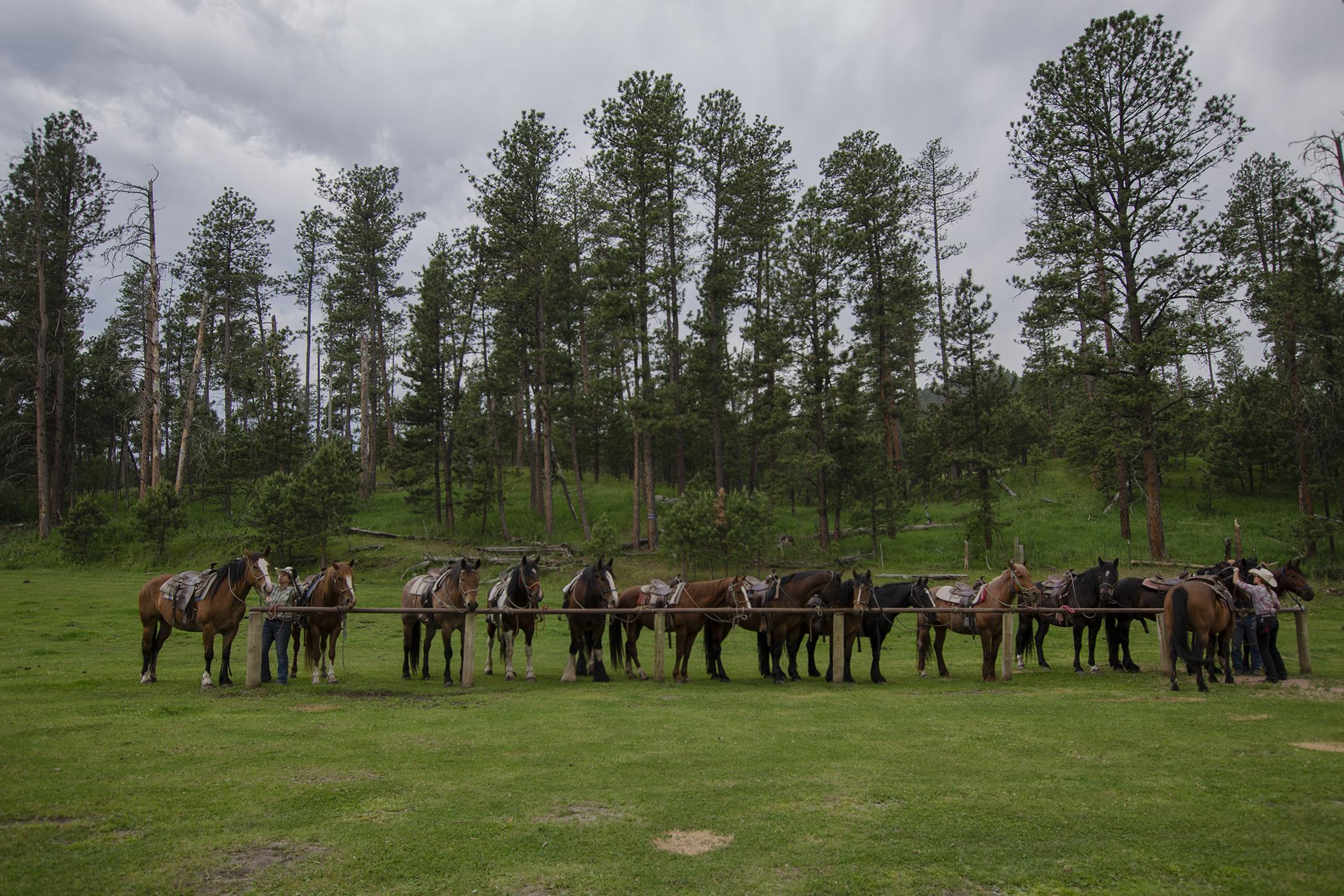 Horses at Palmer Gulch