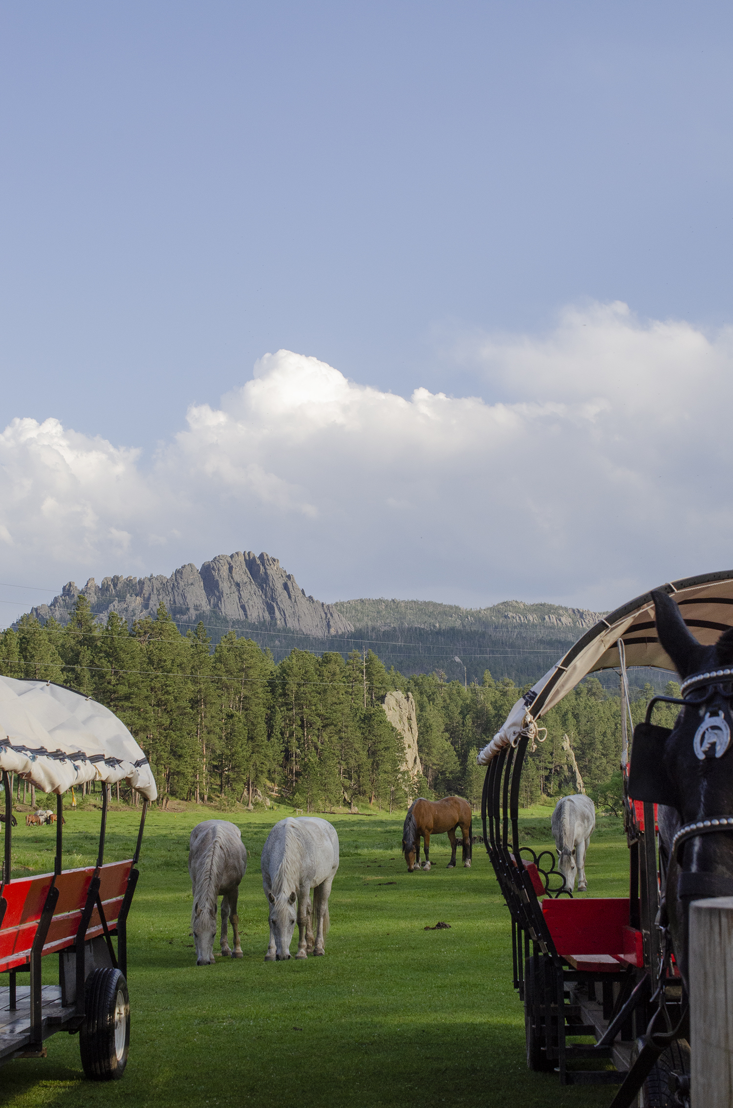Meadow, horses, and covered wagons