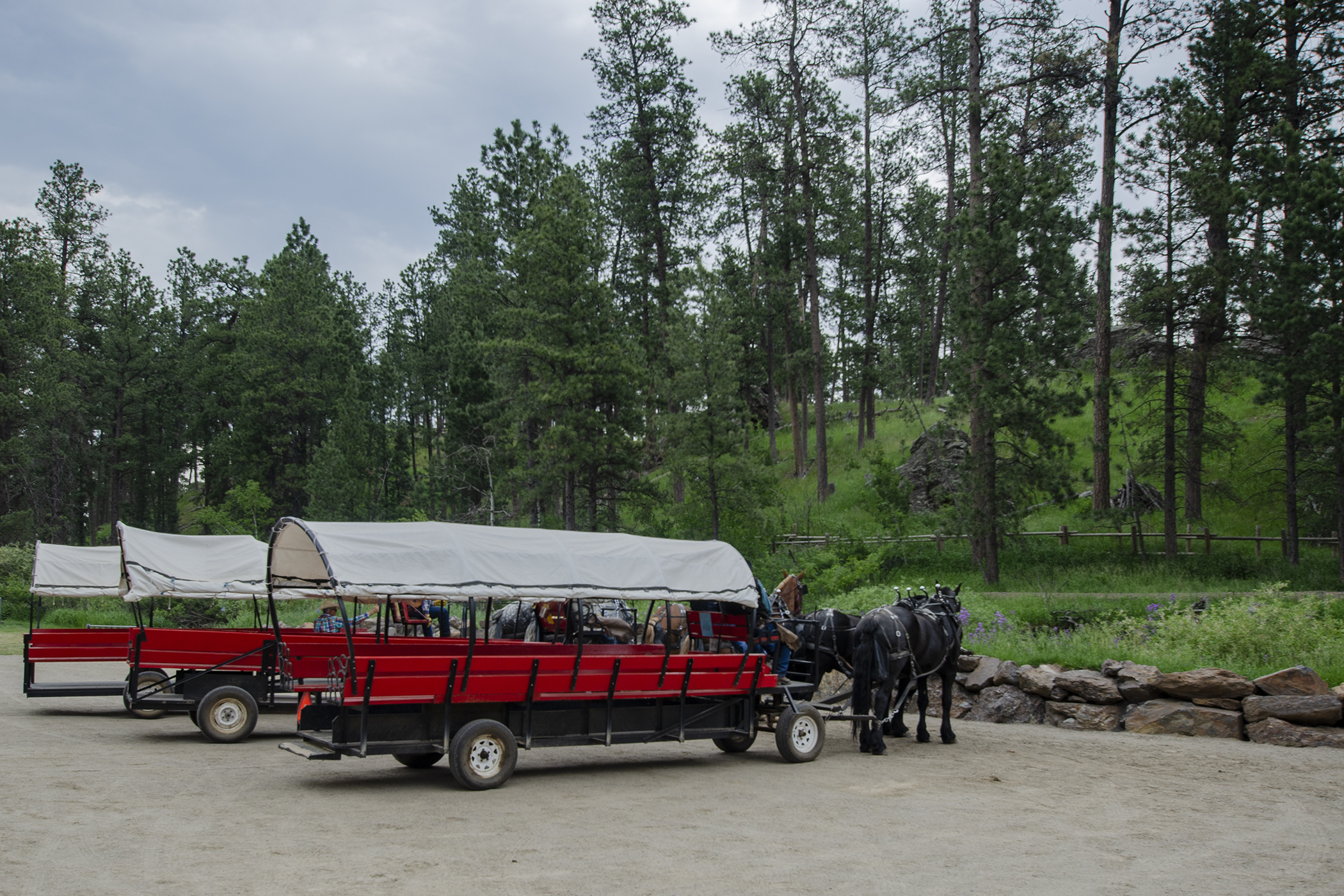 Covered wagons lined up