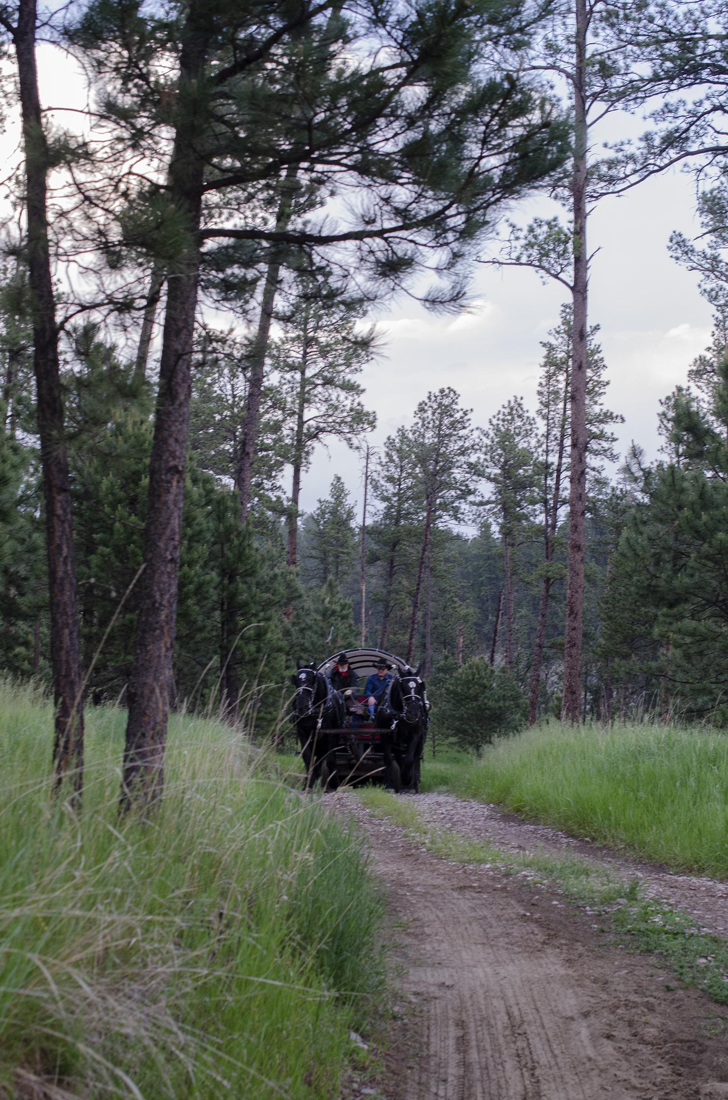 Palmer Gulch covered wagon
