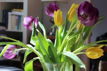 Tulips_15Mar16
