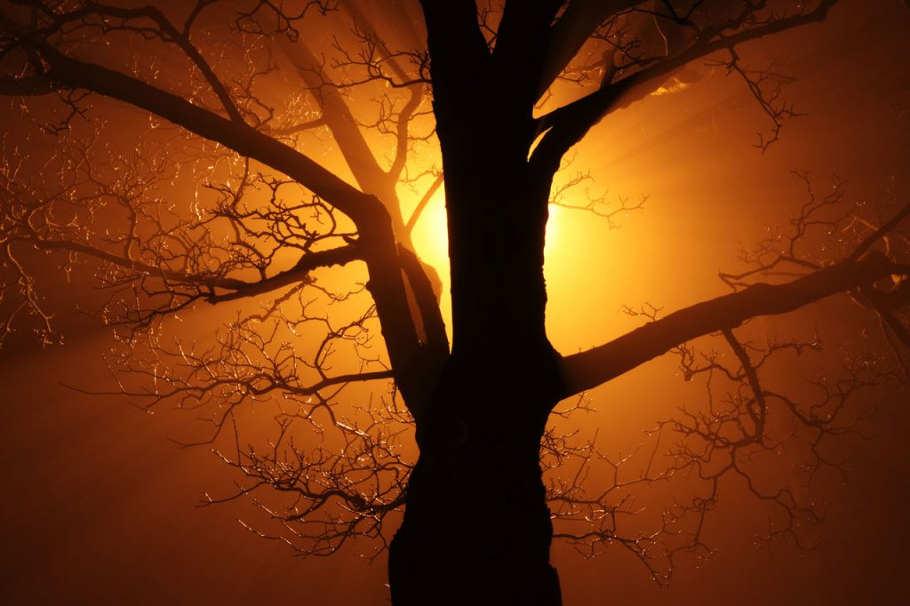 https://www.publicdomainpictures.net/en/view-image.php?image=1936&picture=tree-in-fog-at-night