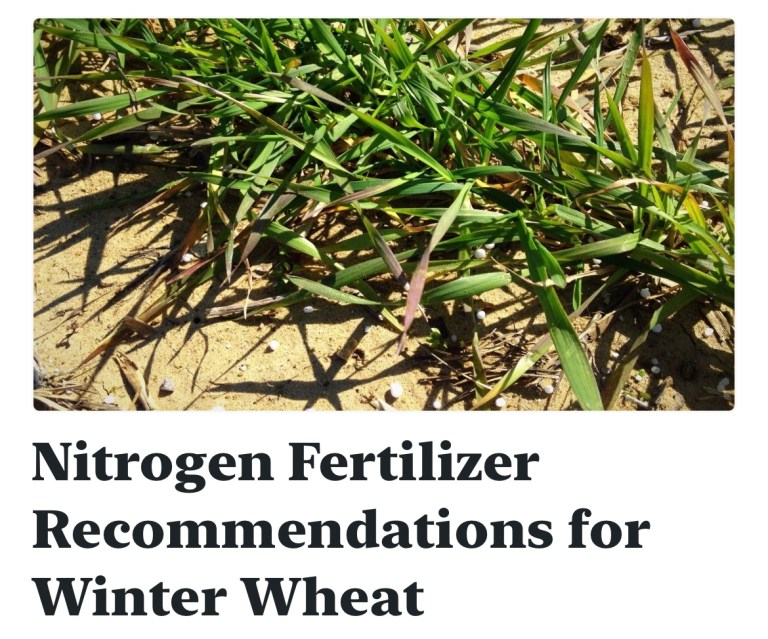 Nitrogen Fertilizer Recommendations for Winter Wheat