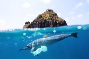 dolphinplasticbag