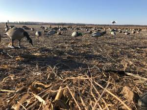 Field Blind Tips