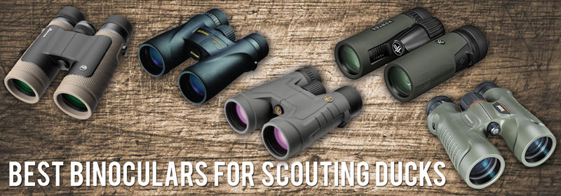 Best Binoculars for Scouting Ducks