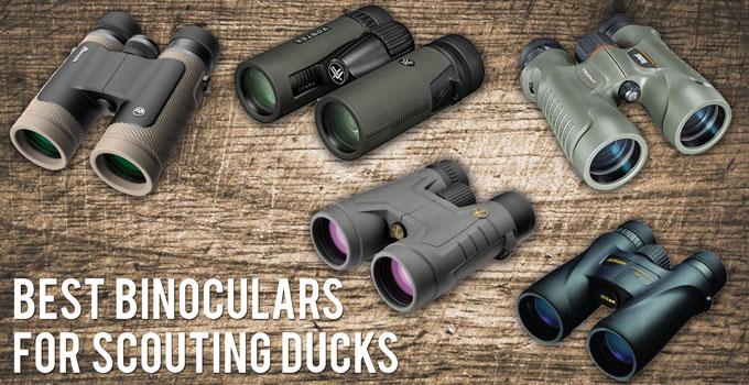 Best Binoculars for Scouting Ducks