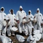 snow goose hunting south dakota