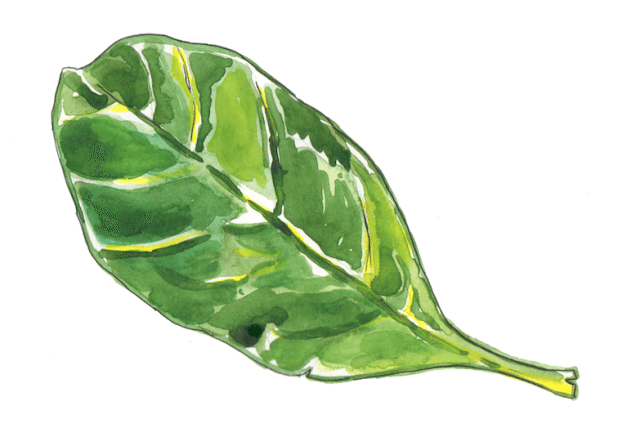 The Weirdest Thing About Spinach: Why Your Mouth Feels Like