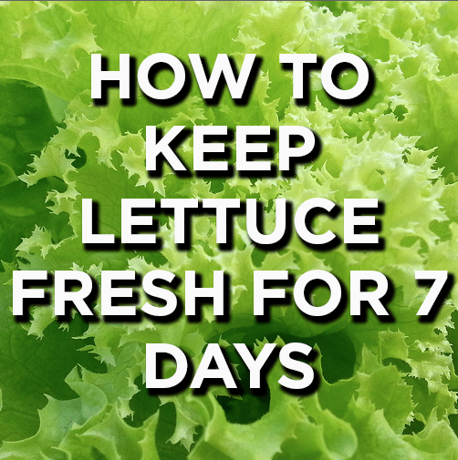 How to Keep Lettuce Fresh for 7 Days (or More!)