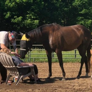 Reiki in the Presence of Horse