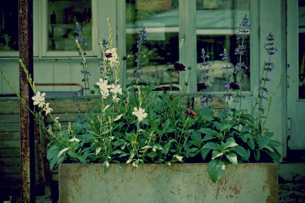 Botnik blommor