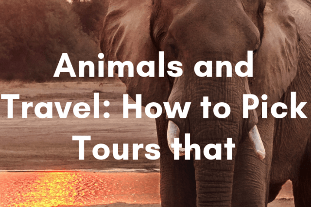 Animals and Travel: How to Pick Tours That Care