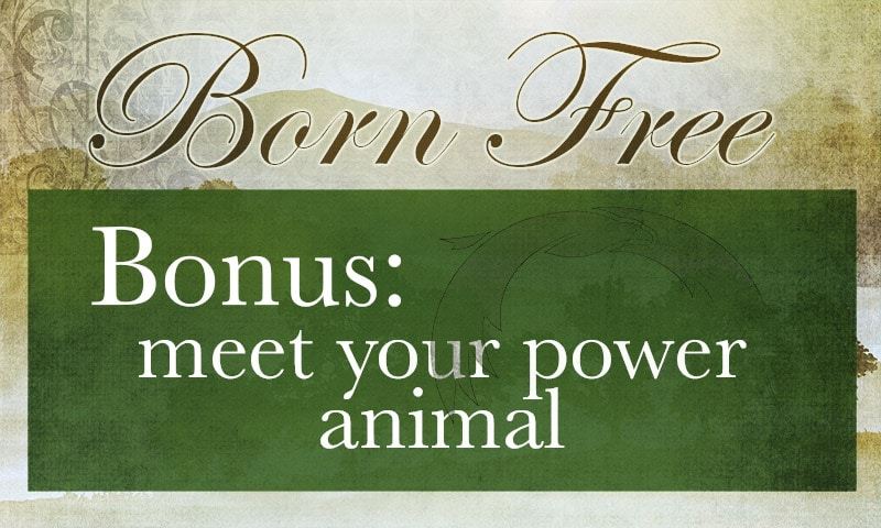 power-animal