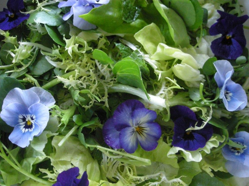 Salads, green, bibb lettuce, mint and watercress salad with Sherry vinaigrette 2