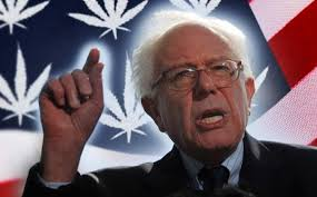 Bernie Sanders Has A Plan That Could Revolutionize Nation's Marijuana Industry Beyond Just Legalization