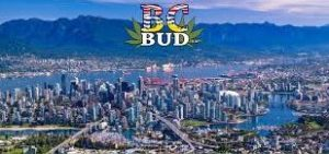 B.C. to limit legal pot sales to stand-alone stores, set personal possession at 30 grams