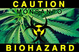 All signs point to a corporate takeover of the marijuana industry by Bayer, Monsanto