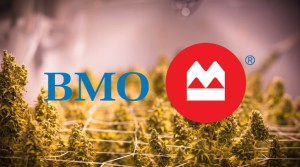 BMO ramps up efforts in marijuana sector by assigning a cannabis analyst